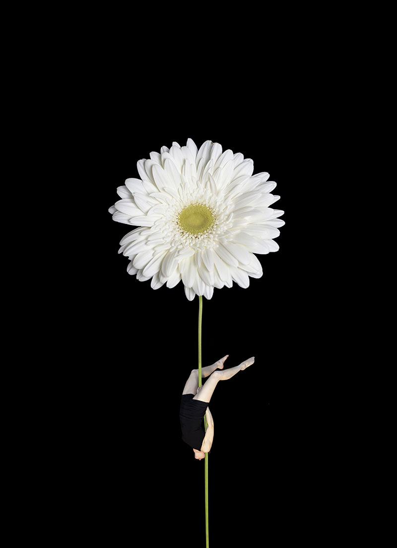 Minimal images on a black background embellished by the sensuality of the aerial disciplines of the circus and the dynamism of the human figure associated with nature.